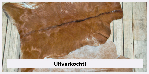 winterhuiden winter huiden antilope koe africa